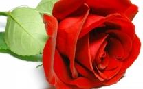 022 Роза, 100ml